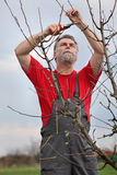 Man pruning tree in orchard Stock Images