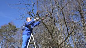Man pruning tree standing on ladders. stock video