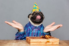 Man with pug dog head hat holding copyspace on palms Stock Photo