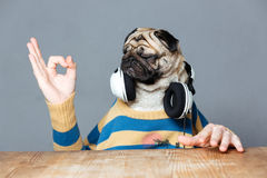 Man with pug dog head in headphones showing ok gesture Stock Photography