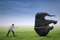Man pulling big elephant on green grass Royalty Free Stock Image
