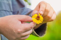 Man pulling petals from flower. In autumn day stock photo