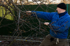 A man pulls a branch from a tree. Man in working clothes working in the garden Royalty Free Stock Images