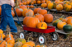 Pulling a wagon of pumpkins Royalty Free Stock Image