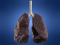 Mán pulmón Imagen de archivo