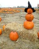 man pumpkin Στοκ φωτογραφία με δικαίωμα ελεύθερης χρήσης