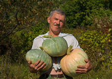 Man with pumpkins 8 Stock Images