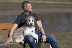 Man and puppy on park bench stock photos