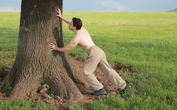 Man pushing against a tree. Man push against a tree Royalty Free Stock Image