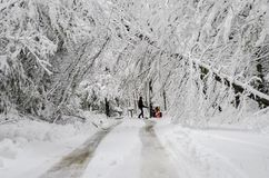 Man pushing snowblower on road with fallen trees in winter snow storm. Man walking with snowblower in heavy wet snow and fallen trees on street in northeast stock images