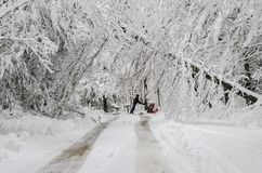 Man pushing snowblower on road with fallen trees in winter snow storm stock photo