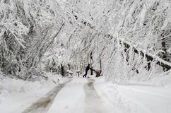 Man pushing snowblower on road with fallen trees in winter snow storm stock photos