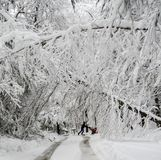 Man pushing snowblower on road with fallen trees in winter snow storm. Man walking with snowblower in heavy wet snow and fallen trees on street in northeast royalty free stock photos
