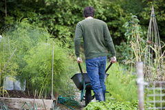 A man pushing a wheelbarrow on an allotment, rear view Stock Photos