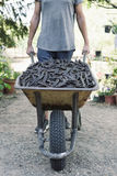 Man pushing a wheelbarrow full of carobs stock photography