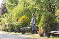 Man pushing wheelbarrow at garden Royalty Free Stock Images