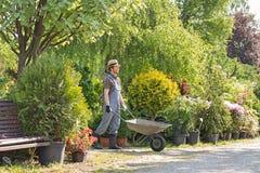 Man pushing wheelbarrow at garden Stock Photography