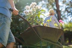 Man pushing a wheelbarrow in the garden Royalty Free Stock Photography