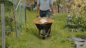 Man, pushing wheelbarrow, manure stock footage