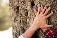 Man put hand on old tree trunk. Male palm on aged oak tree bark. Royalty Free Stock Photography