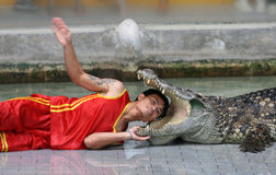 A man puts his head in crocodile mouth Stock Photos