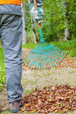Man with rake near to the fall leaves in park Stock Photo