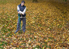 Man with rake standing in autumn leaves Royalty Free Stock Images
