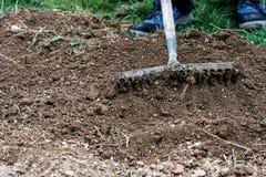 Man rakening garden bed Stock Image
