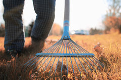 Man with rakes in autumn old grass Royalty Free Stock Image