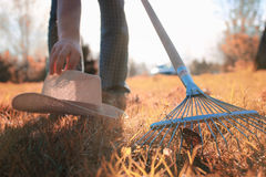 Man with rakes in autumn old grass Stock Image