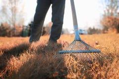 Man with rakes in autumn old grass Stock Photos