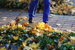 Man raking leaves in the garden Royalty Free Stock Images