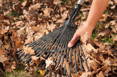 Man raking leaves in the garden Stock Image