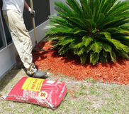 Man Raking Mulch for Flower Garden. A man rakes mulch for a flower garden to conserve moisture, control weeds, and insulate plants. Another bag of mulch is Stock Photos