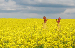 Man in rape field. Yellow coated open-armed man standing in a yellow blooming rape oilseed field Royalty Free Stock Images