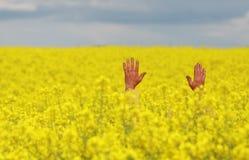 Man in rape field. Yellow coated open-armed man standing in a yellow blooming rape oilseed field Stock Photos