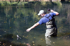 Man reaching for the bait caught rainbow trout Royalty Free Stock Photography