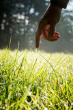 Man reaching to touch fresh green sunlit grass. Hand of a man reaching down with his finger to gently touch fresh green grass backlit by the sun in a country Stock Photo