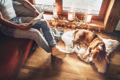 Man reading book on the cozy couch near slipping his beagle dog on sheepskin in cozy home atmosphere. Peaceful moments of cozy