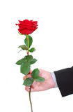 Man red rose Stock Image