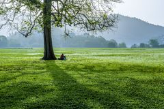 The western side of the Queen`s Park Savannah in Port-of-Spain, Trinidad one early morning. A man relaxes below a pour tree at the Queen`s Park Savannah one Stock Photos
