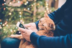 Man relaxing at home with ginger cat and smartphone in his hand,. Young man relaxing at home with ginger cat and smartphone in his hand, cozy holiday warm hygge Stock Photos