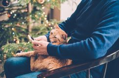 Man relaxing at home with ginger cat and smartphone in his hand, Stock Photography