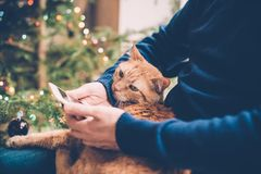 Man relaxing at home with ginger cat and smartphone in his hand, Stock Image