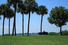 Man Relaxing Watching the Sailboats. Man relaxing on a bench by the water.  Sailboats and palm trees fill the scene on this beautiful day in south Florida Stock Photo