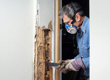 Man removing termite damaged wood from wall Stock Image