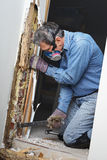 Man removing termite damaged wood from wall. Man prying sheetrock and wood damaged by termite infestation in house stock photography