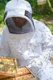 Man removing tray from beehive royalty free stock photography