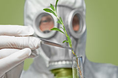 Man in respirator puts green plant in flask Royalty Free Stock Images