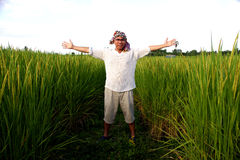 Man in rice field Royalty Free Stock Photography